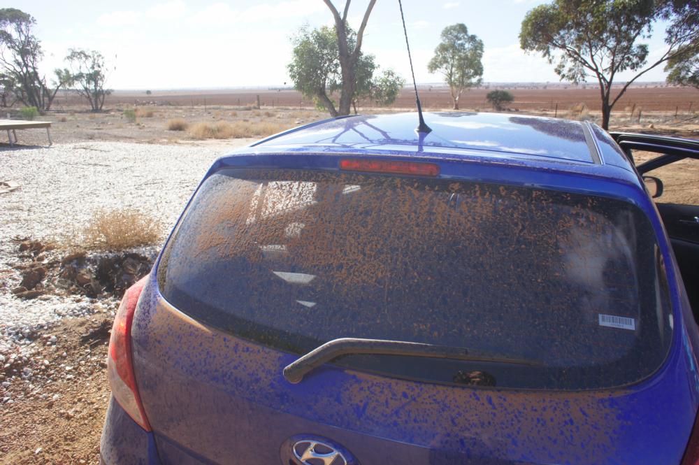dirtiest rental car in Australia