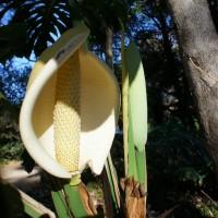 Mega-flower, possibly man-eating (unconfirmed)