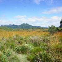 Buttongrass Plains