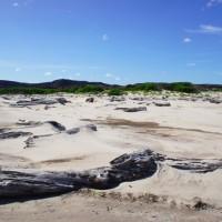 Beach at Pieman Heads