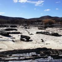 Bushfire remnants at Pieman heads
