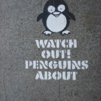 Watch out! Penguins in Manly!