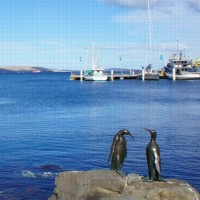 Penguin sculptures in Hobart