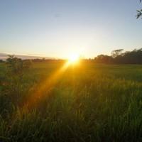 Yellow water wetlands, Kakadu National Park