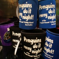Penguins do it every night in Phillip Island