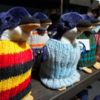 Penguin sweaters in Phillip Island