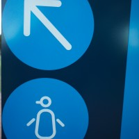 Penguins, this way in Phillip Island