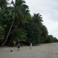 Coconut picking at Cape Tribulation