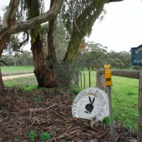"Clare Valley ""Bunny's Place"""