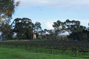 Clare Valley Sevenhill Jesuit winery