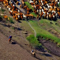 Droving in Queensland, image by Joshua J Smith