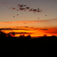 Sunset with bats at Katherine