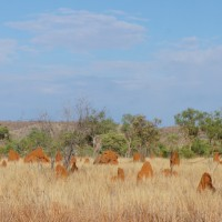 Termite mounds that dot the Kimberley landscape