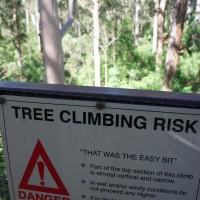 The Dave Evans Bicentennial Tree in Warren National Park, Western Australia