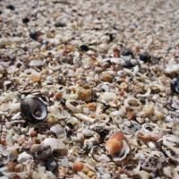 Shelley Beach, Peaceful Bay, WA